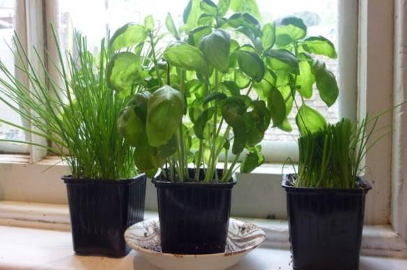 cropped-herbs.jpg